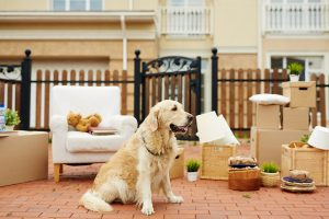 Pet proofing your property